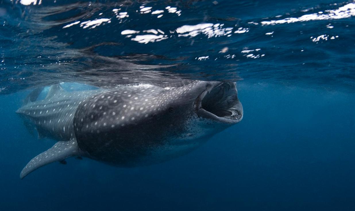 Plongée aux Maldives 2014 Jour J-258