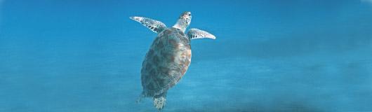 turtle-601286